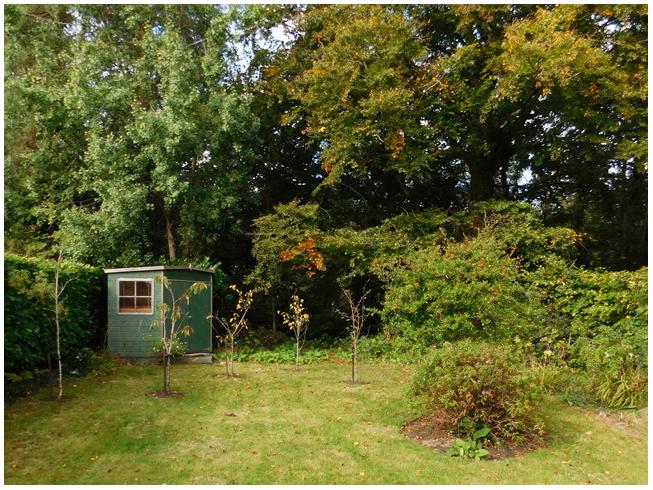 Broadstone House - the back garden
