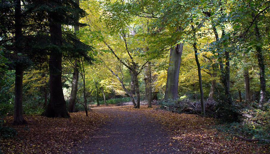 The Parkland Walk